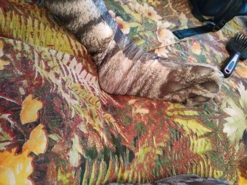 ручка зебра; взрослая игрушка; женский носок;