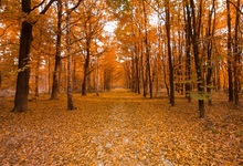 Laeacco Autumn Fallen Leaves Forest Tree Scenic Photography Backgrounds Customized Photographic Backdrops For Photo Studio