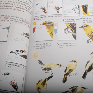 Image 5 - 10pcs Self study Chinese painting textbook for beginners Chinese color brushing painting art book about birds Plum Lotus orchid