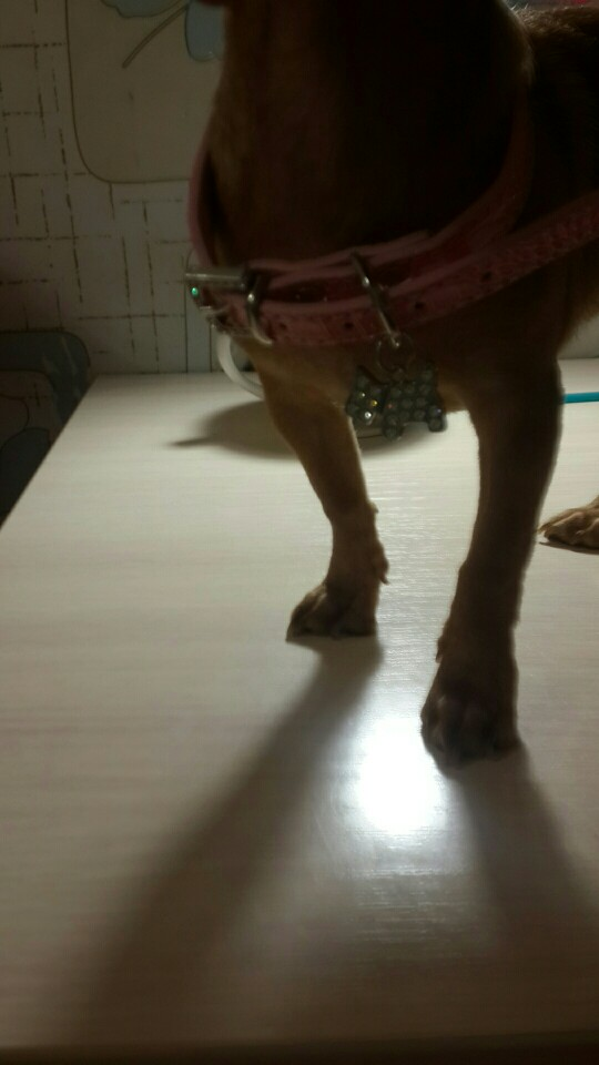 1 шт. кристалл кулон Собака Воротник Щенок Cat Pet Пряжка собак приводит шейный ремень животных Pet аксессуары собаки поводок и жгутов