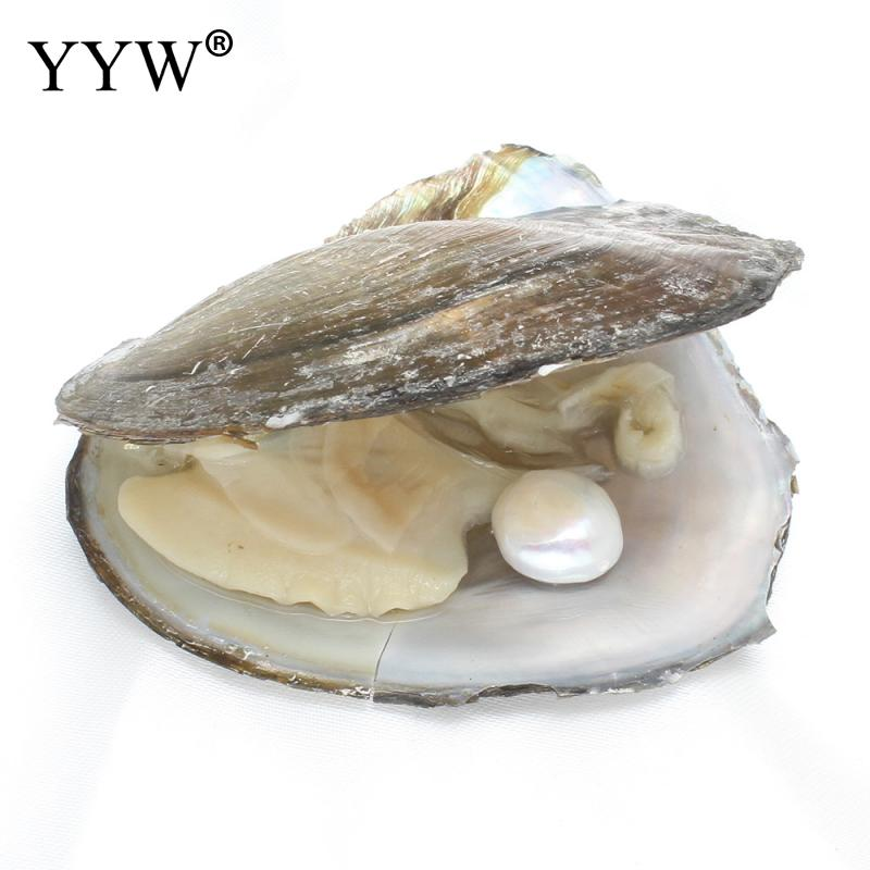 12-13mm Vacuum pack Oyster Pearl Wish Freshwater Pearl Mussel Shell with Pearl Inside Jewelry Making Mysterious Gift Surprise