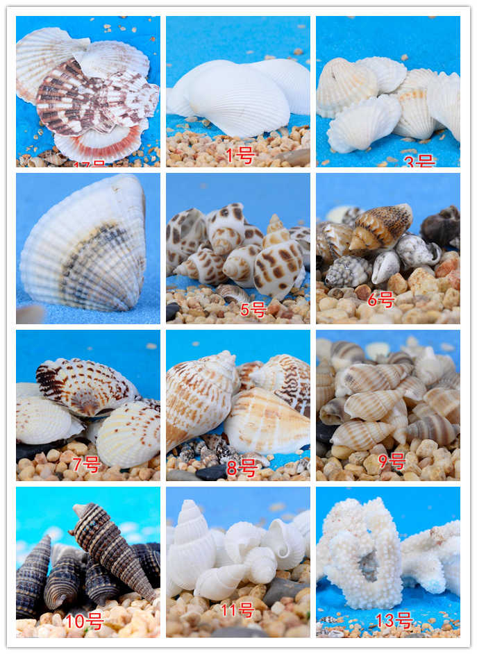 Natural Mini Conch shell Miniature Garden Ornaments Micro landscape toys decoration Gifts DIY Mini Fairy tale world CJ125
