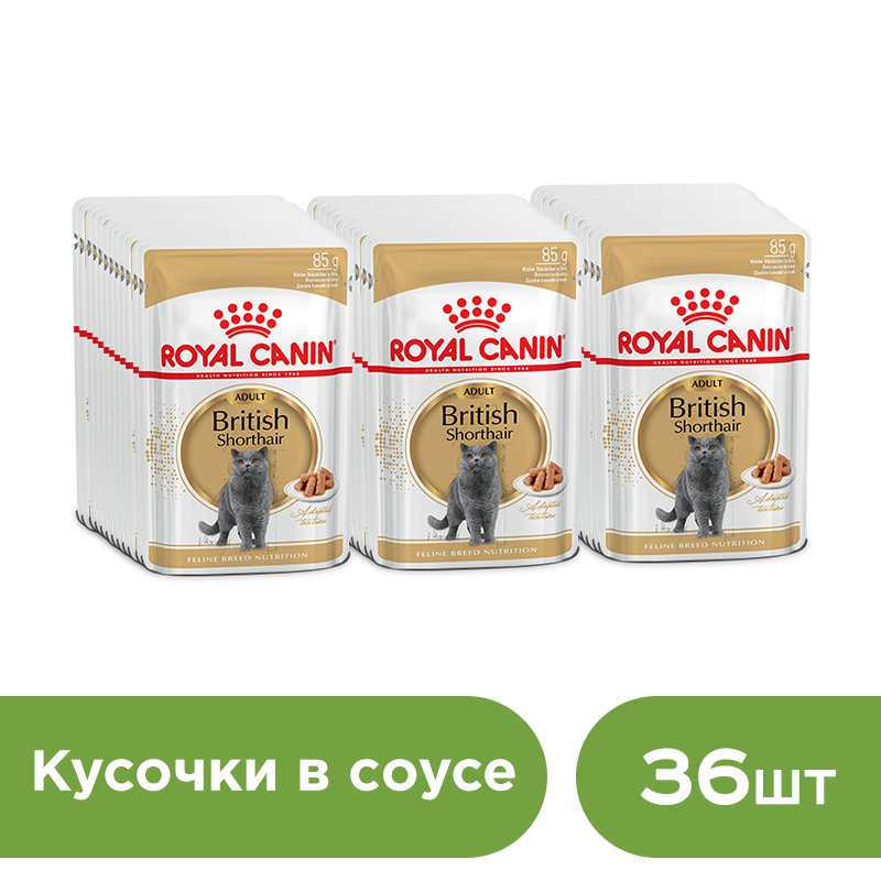 цена на Cat wet food Royal Canin British Shorthair Adult slices in sauce (0.085 kg*36 pieces)