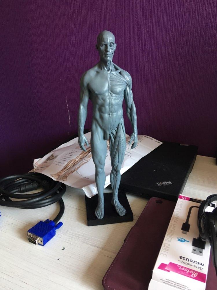 Online-Shop Dentallabor Zahnarzt 30 cm höhe Menschen akupunktur ...