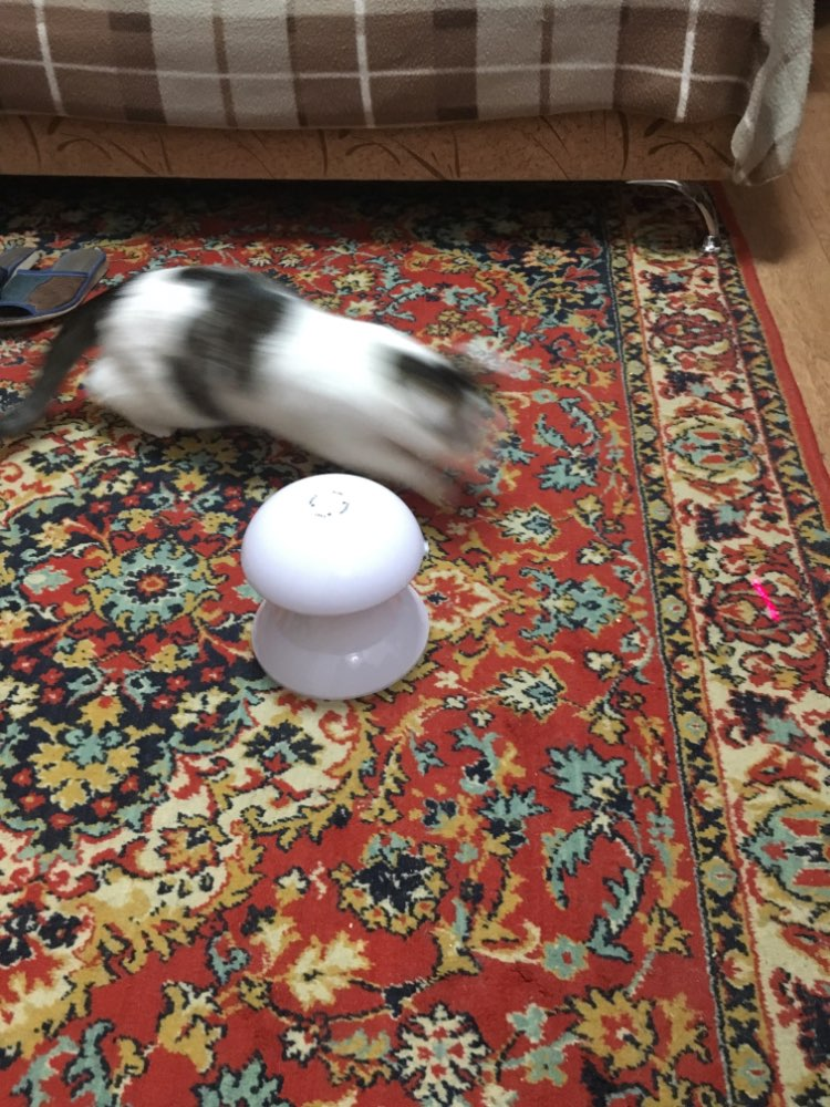 KITTY SPINNING LASER: CAT TOY OF THE YEAR!!! photo review