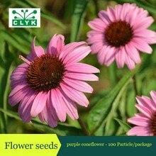 Фотография 100pcs Perennial purple coneflower Seeds, Ornamental flower seed, four seasons easy grow flowers seeds