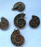 Wholesale 2PCS Ammonite Fossil Pendants with Silver Bails, Ammonite Pendant, Ammonite 1.8(40mm)