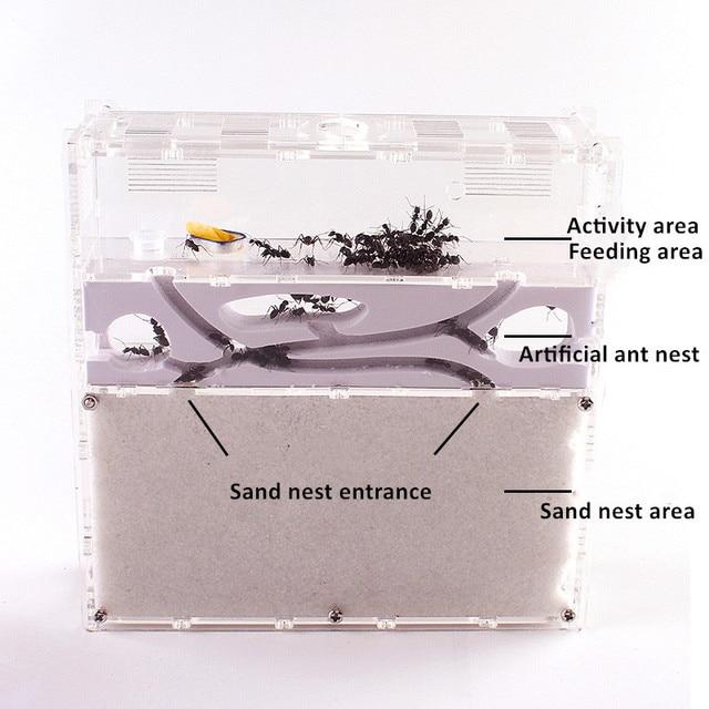Ant Acrylic Combo with Hybrid Sand Nest Ant Farm Formicarium for Ant Housing