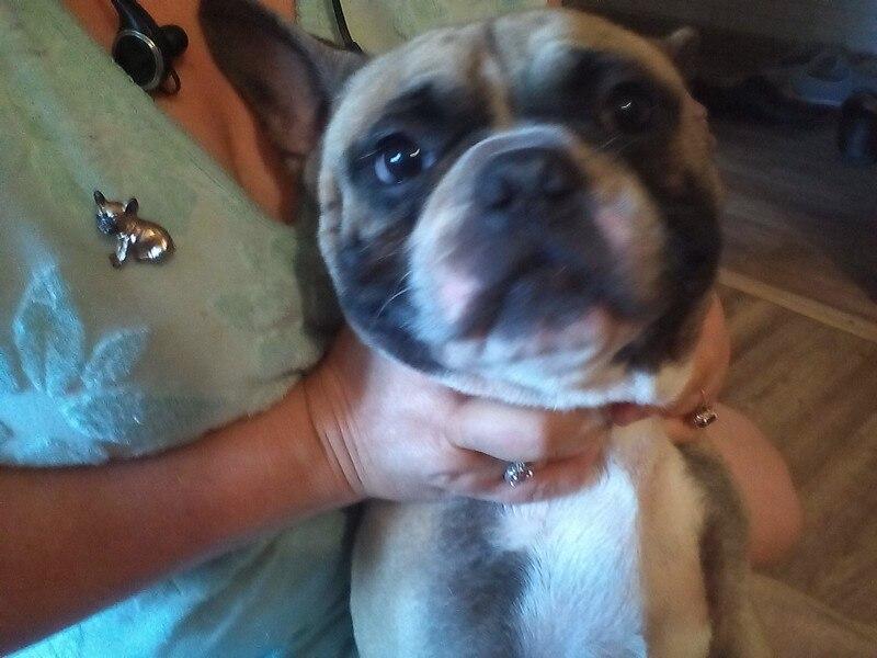 Cute Pug Dog Brooches Green Crystal Eyes Animal Corsage Pins*