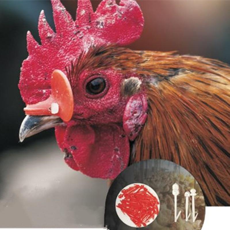 20pcs Red Chicken Eyes Glasses Livestock Avoid Hen Pecking Poultry Plastic