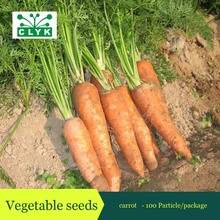 Фотография Carrot seeds yellow Radish seed vegetables 100 particles / bag