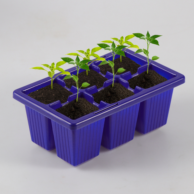 Seed Sprouter Tray 10 Pieces Set