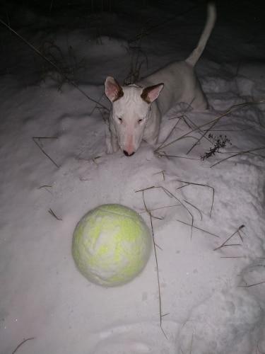 Doggy Jumbo Ball photo review