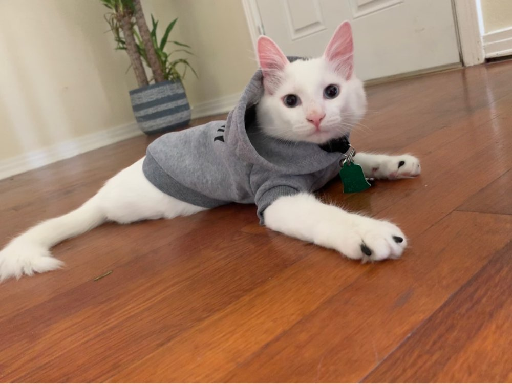 kedi sweatshirt