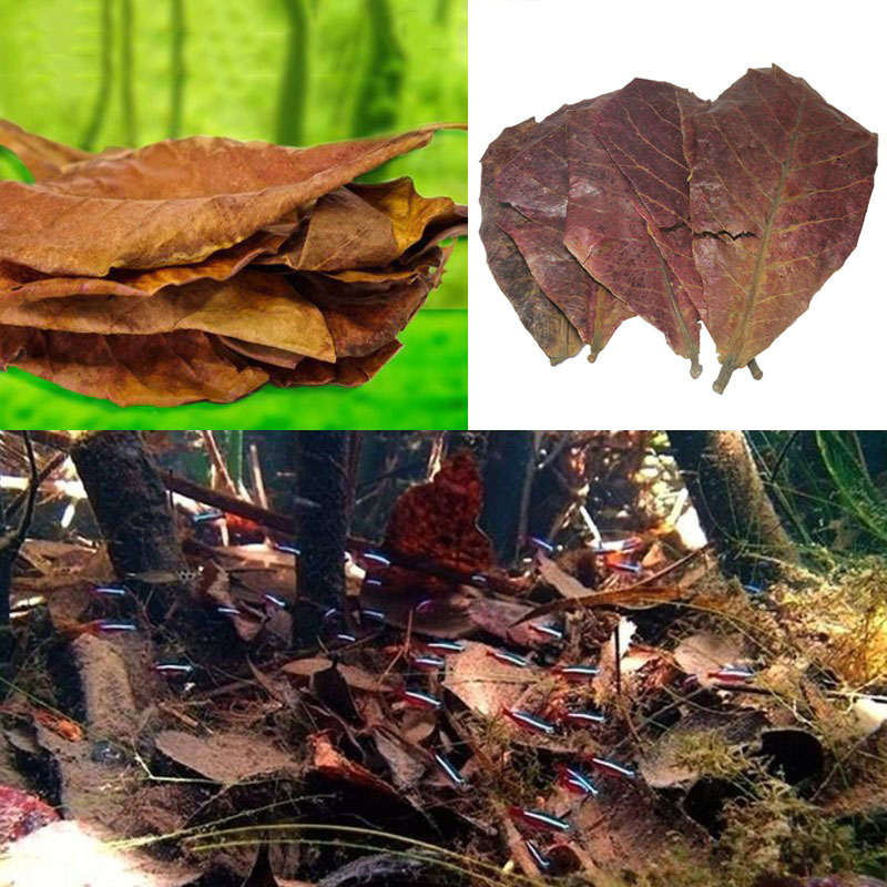 10pcs Natural Olive Leaf Aquarium Filter Terminalia Catappa Foetida Leaves Island Almond Leaf Fish Cleaning Treatment