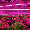 12V LED Grow Lights DC12V Growing LED Strip Full Spectrum Aquarium Greenhouse Plant Growth Light Set