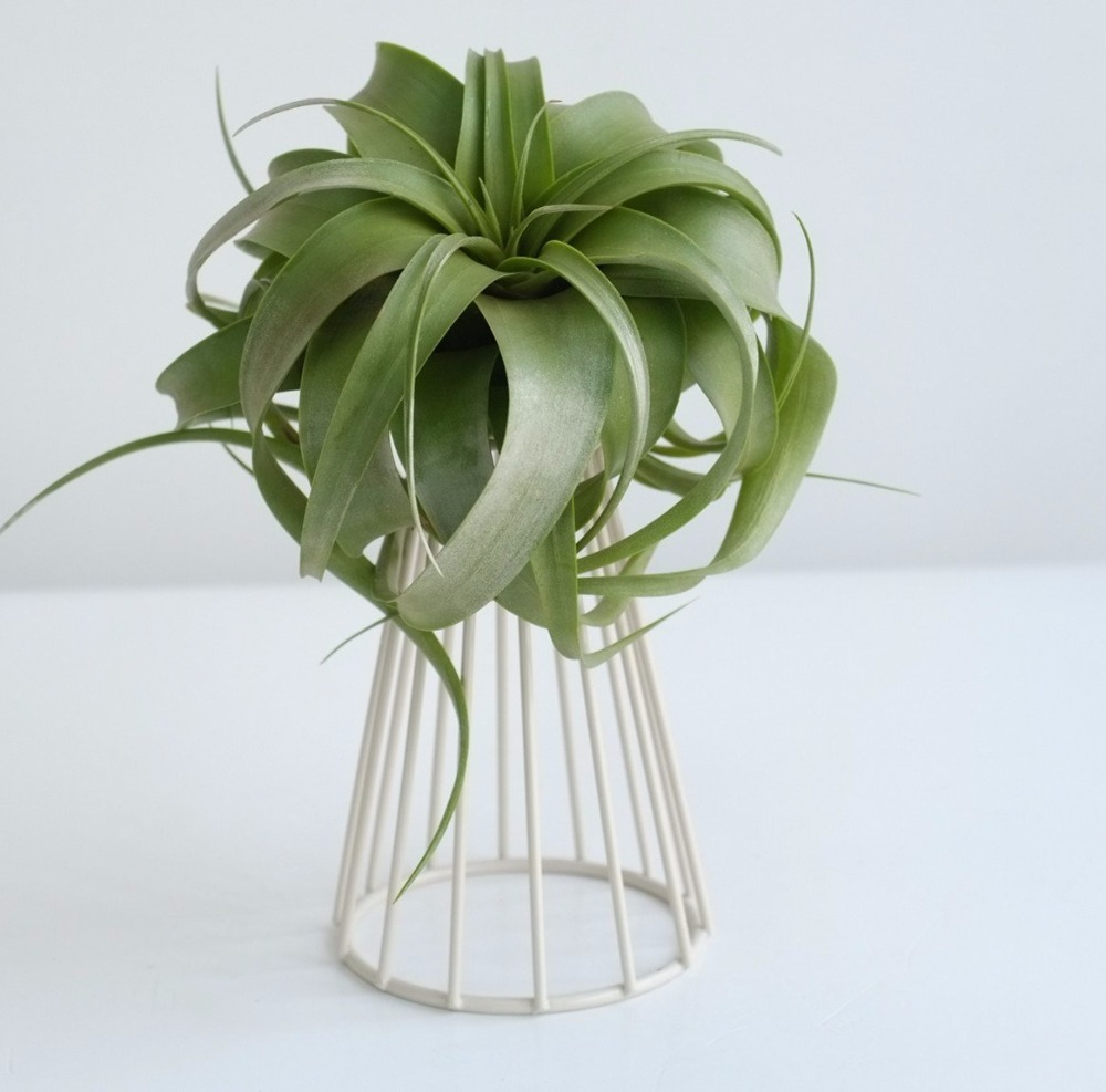 Tabletop Metal Air Plant Holder Stand Tillandsia