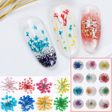 100pcs Pressed Dried Ammi Majus Flower Dry Plants For Nail art Epoxy Resin Pendant Necklace Jewelry Making Craft DIY Accessories