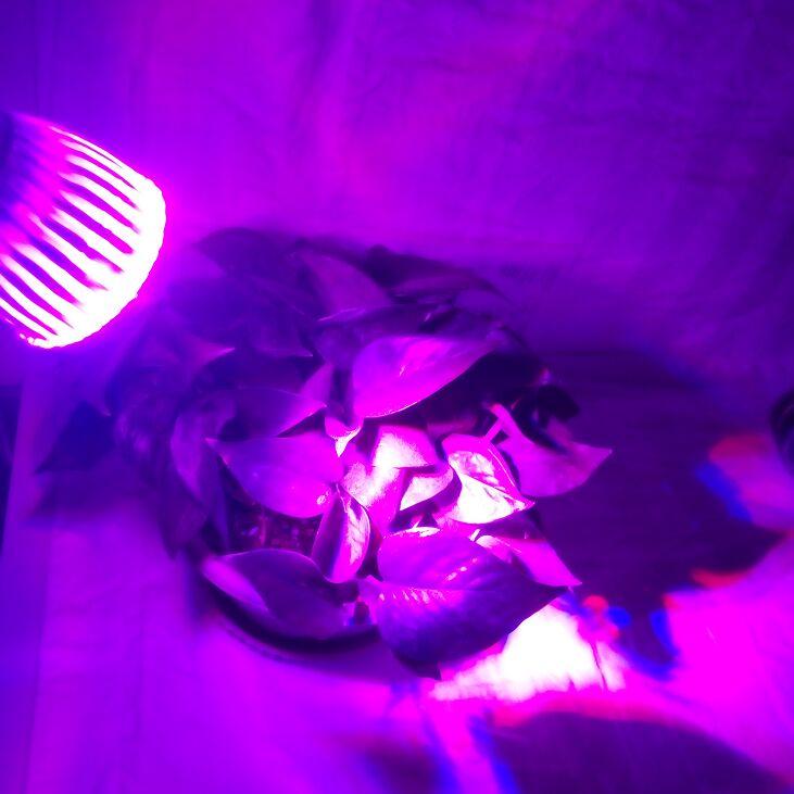 10 ピース/ロットカスタマイズ色 led 成長ライト E27 電球栽培照明はボックスランプ diy 水耕花藻類植物魚  グループ上の ライト & 照明 からの LED グローライト の中 1