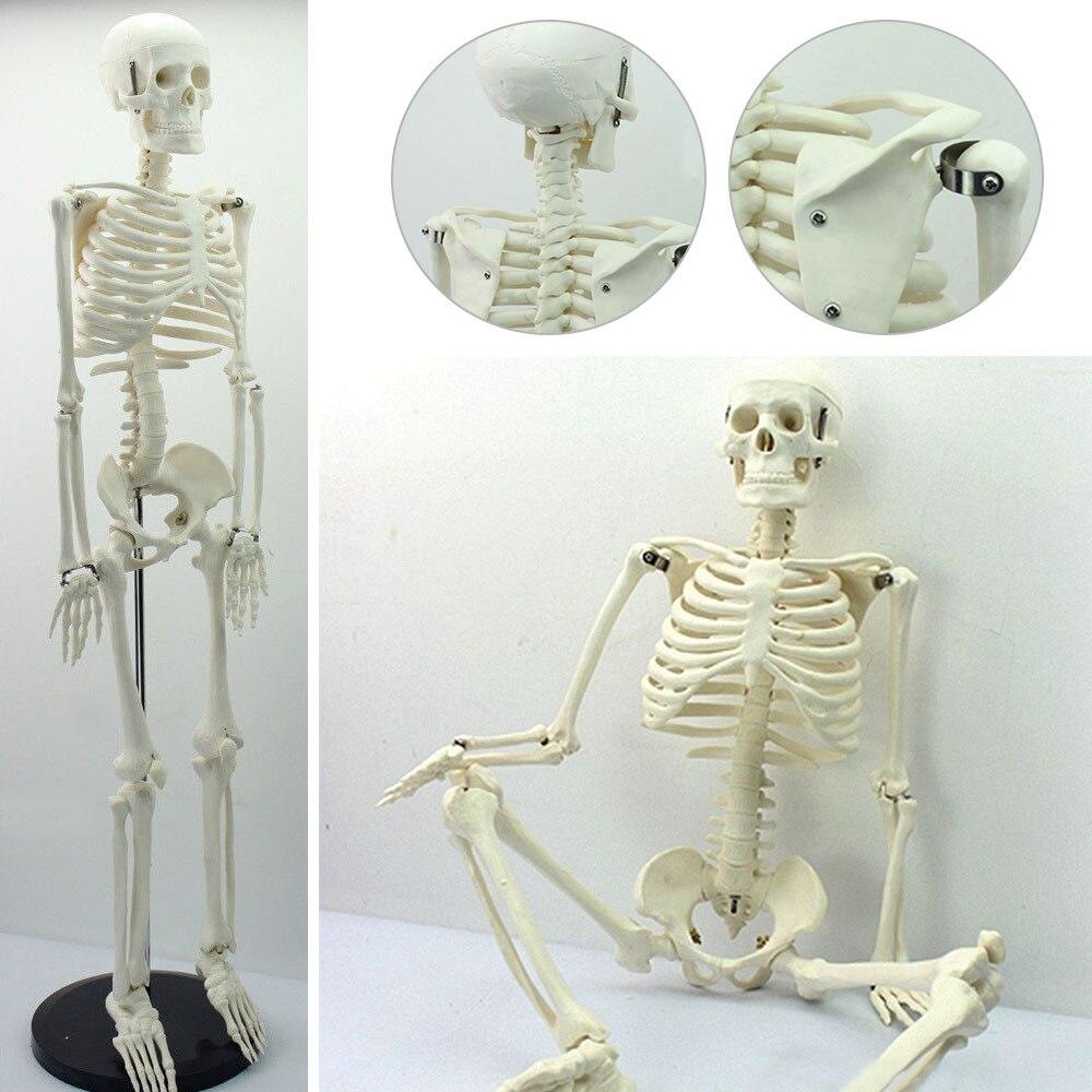 45CM anatomía anatómica humana esqueleto de modelo médico venta al por mayor póster médico ayuda para Aprender anatomía modelo esqueleto humano