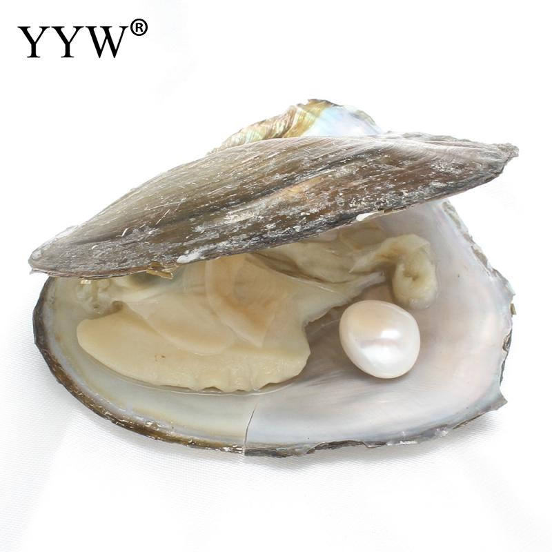 Vacuum pack Oyster Pearl Wish Freshwater Pearl Mussel Shell with Pearl Inside Jewelry Making Mysterious Gift Surprise 12-13mm