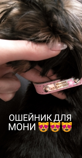 4fbd72ddfd4e Chic collar, asked the seller to write the name of the dog in russian, and  he did so. I'm delighted. Fast shipping. I recommend