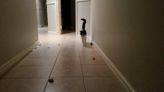 Творческий дизайнер ложные мыши игрушки для домашних животных 10 шт./лот собака кошка игрушки дешевые мини игрушки для кошек котенок товары для животных расходные материалы игрушки для кошек игрушки для кошек