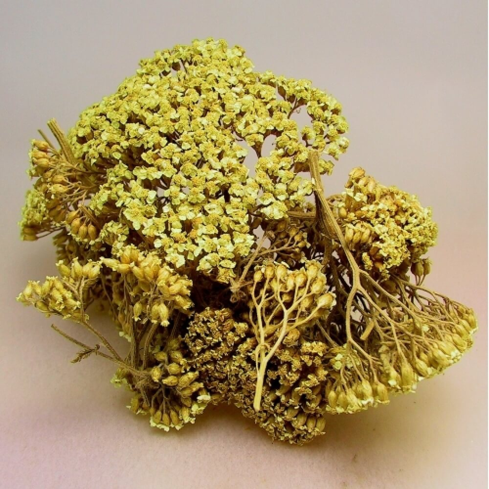 Yarrow Flower Dried Herb