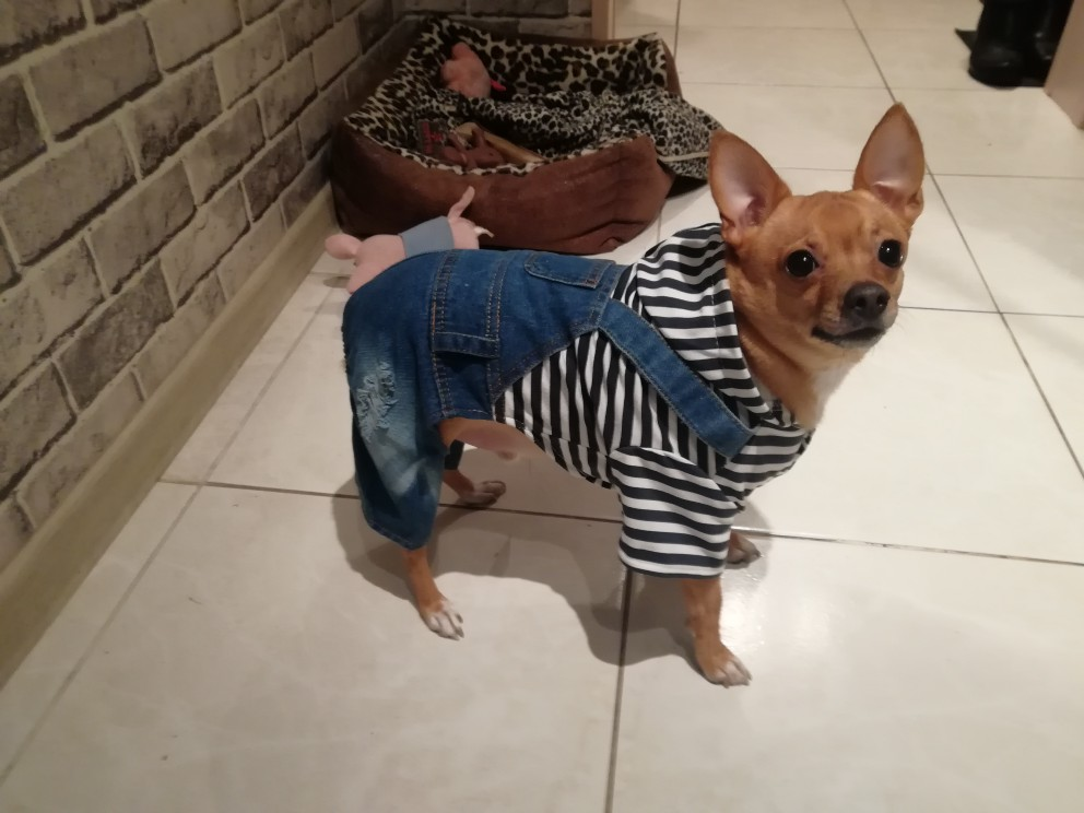 adf34d99569c HOOPET Pet Dog and Cat Clothing Stripe Jumpsuit Puppy Dress Apparel ...