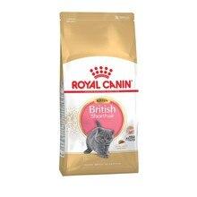 Royal Canin British Shorthair Kitten корм для котят британской короткошерстной породы, 10 кг