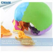 12393-1/Дидактический цветной 22 части взрослый человек череп, медицинские образовательные Обучающие анатомические модели