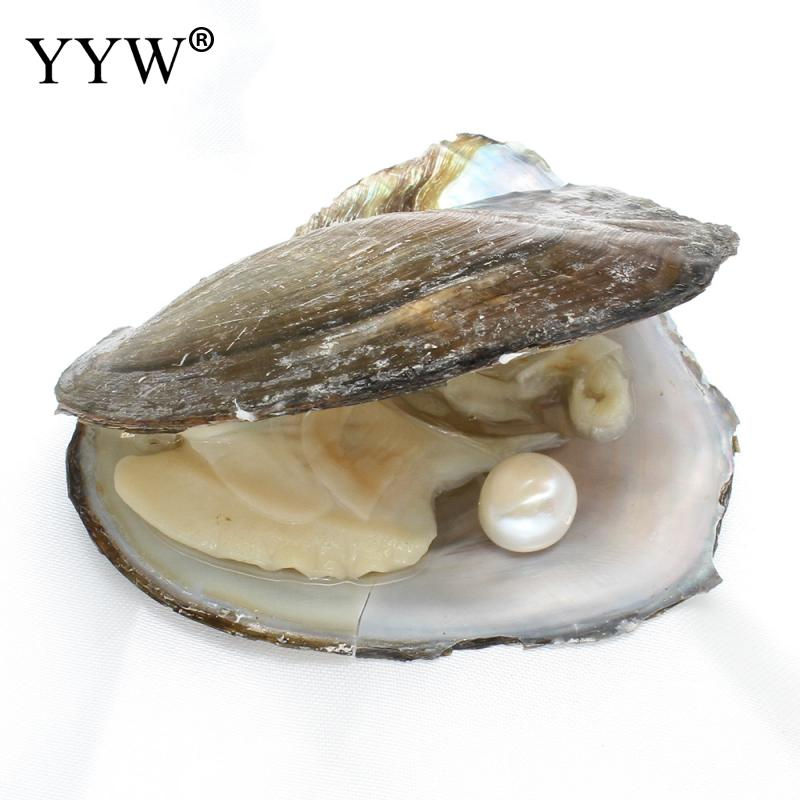 YYW 1pc Inside Vacuum Packed Freshwater Pearl Pearl Mussel Shell Wish Oyster Mysterious Gift Surprise Crafts DIY Pearl Oysters