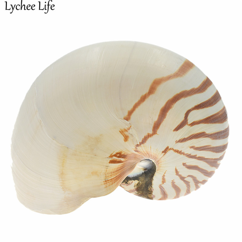 Naturel Nautilus mer coquille mignon Figurines miniatures cadeau moderne maison Table Mini décor artisanat