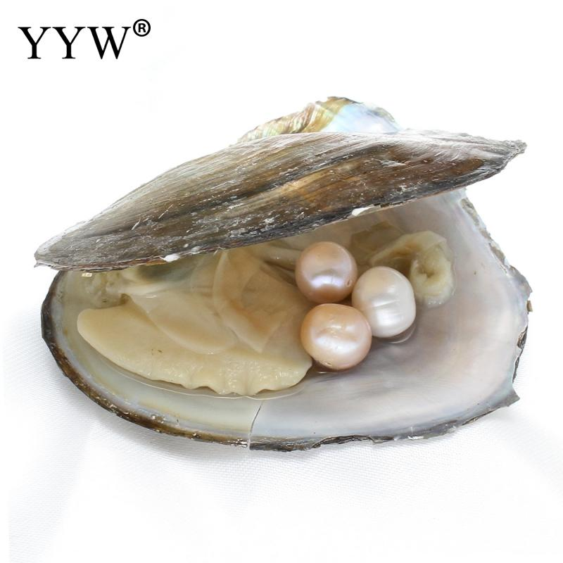 Vacuum pack Oyster Wish Freshwater Pearl Pearl Mussel Shell with Pearl Inside Different Colors of Pearl Gift Surprise 10-11mm