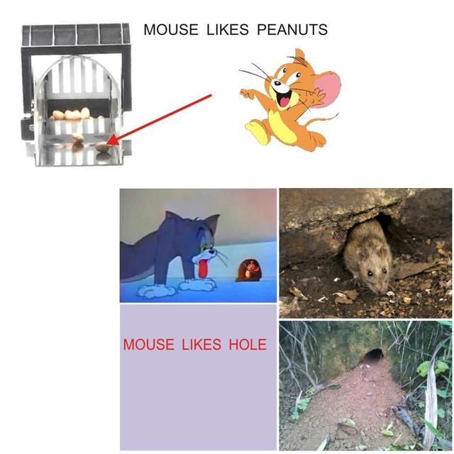 2pcs Mouse Trap Humane Rodent Catcher Catches Mice Alive Transparent Smart Mouse Trap No Kill Live Catch
