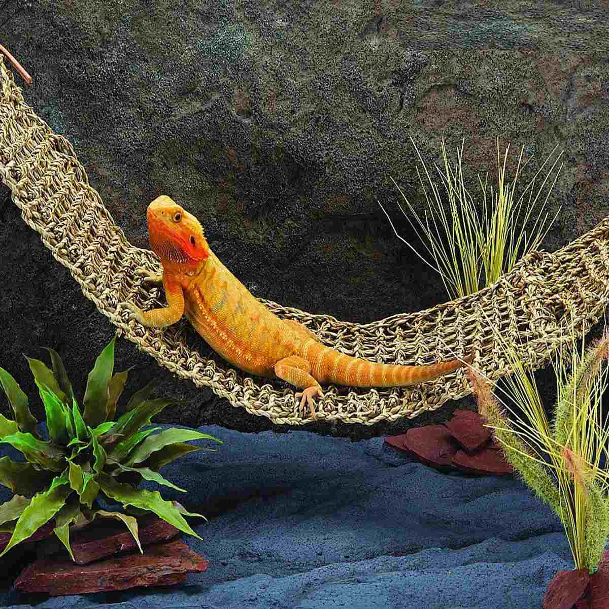 Hamac Swing Lézard Animal Chaton Chat Transat Reptile Jouet Suspendu Algues Lit Tapis X-Grand Cages Rat Petit Ermite crabes Geckos