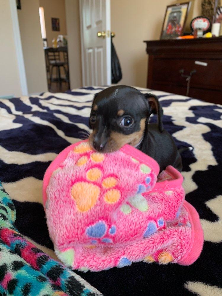 Dog Fleece Blanket