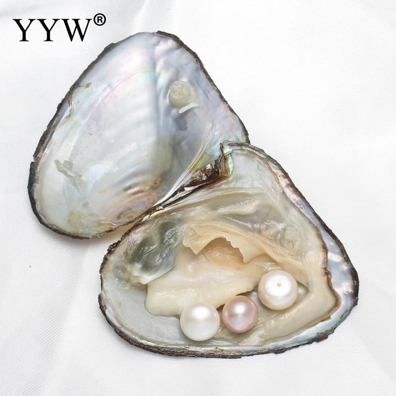 Vacuum pack Oyster Wish Freshwater Pearl Pearl Mussel Shell with Pearl Mysterious Gift Surprise Inside Different Colors of Pearl