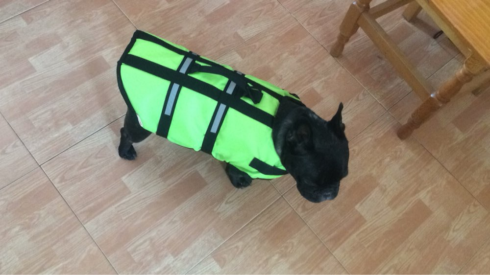 Swimming Dog Life Vest Dog Water Jacket Pet Threads