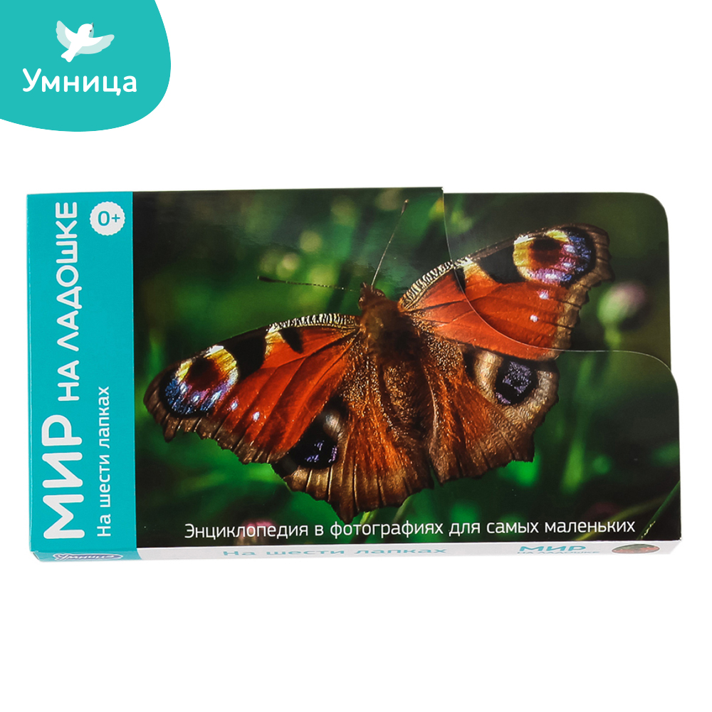 Card Games Umnitsa 2014 Learning & Education The surrounding world Insects cards encyclopedia for kids games card games lisciani r63604 learning education kids games for baby bizyboard toy