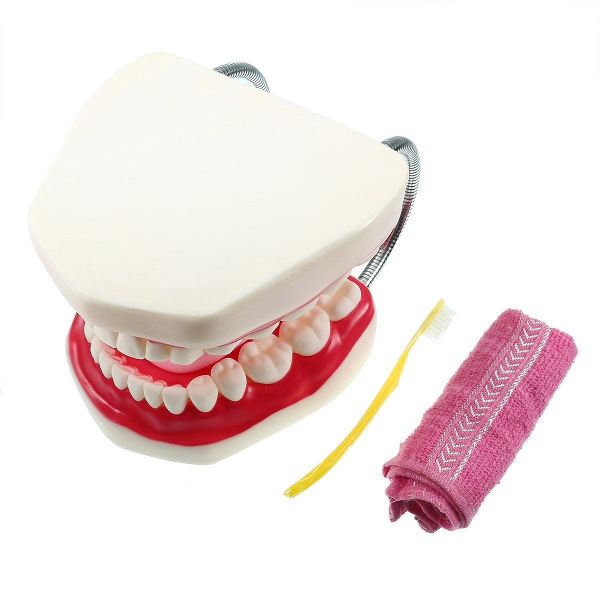 Large Dental Adult Teeth Model 6 Times Oral Models Tooth With Tongue For Kindergarten Child Early Teaching Study Health Care heymodel adult teeth model dental teaching model with dp jaw rack