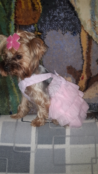 MEGA Cute Dog Clothes for Females | Stripe Dog Skirt | Dog Dress with Bow photo review