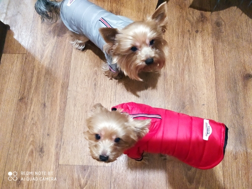 Chic Dog Jacket | Dog Life Jacket | Waterproof Dog Coats photo review
