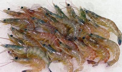 吃了虾和啤酒怎么解毒 吃虾的同时不能吃什么-养生法典