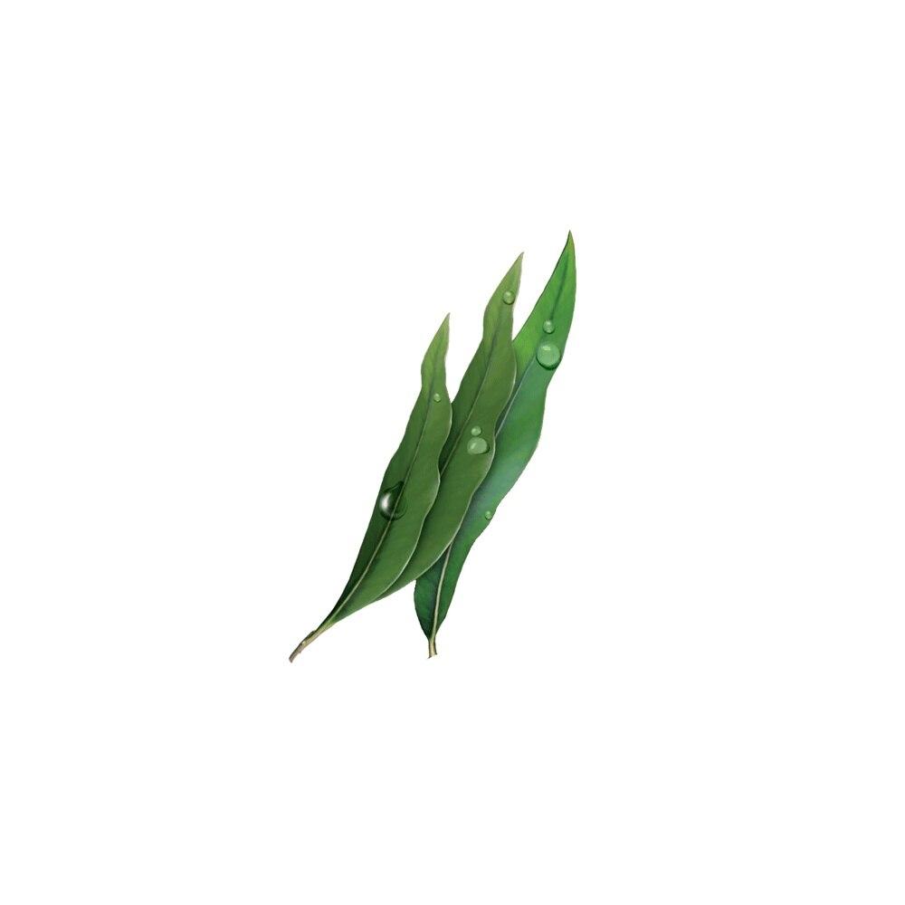 Mentolin eucalyptus without sugar · 1Kg.