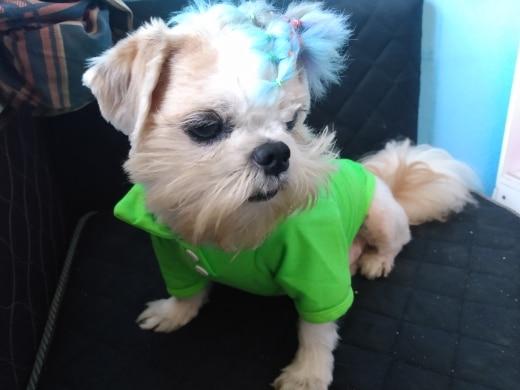Koszulka dla psa POLO photo review