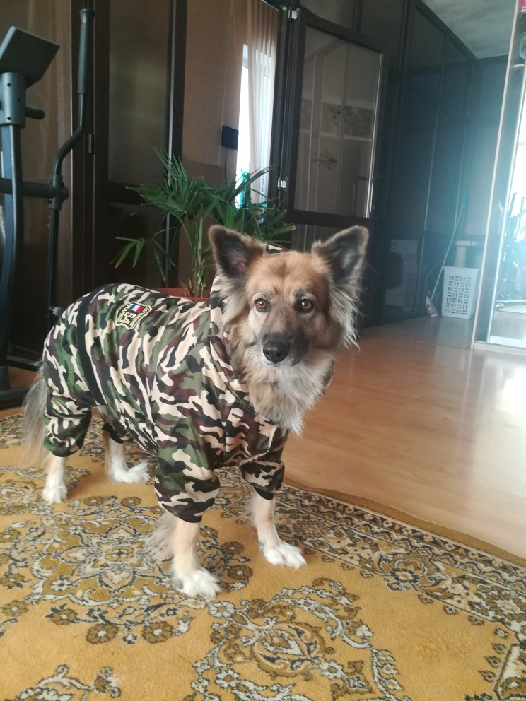 Dog Snowsuit   Dog Jacket   Coats for Dogs Waterproof   Dog Coat for Winter photo review