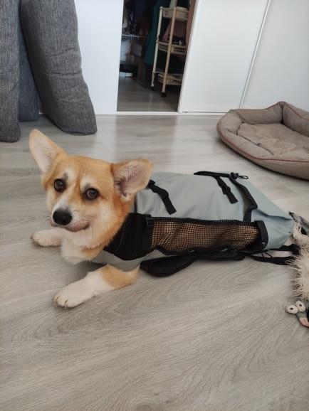 DogMEGA Dog Carrier Backpack 60 lbs   Large Dog Carrier Backpack   Dog Carrier for Hiking photo review
