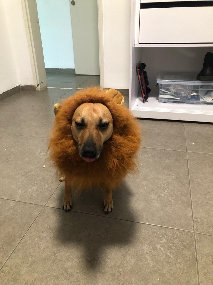 Dog Lion Mane for Medium & Larger Dog | Dog Lion Costume | Cat Lion Mane | Funny Dog Costumes photo review