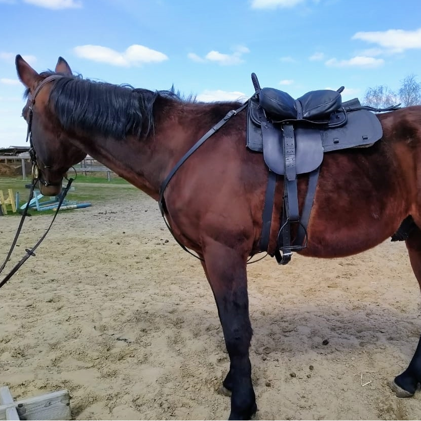 Cossacks Horse Saddle Simple